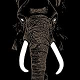 Don't Buy Ivory Anymore! - The Music of Henri Texier