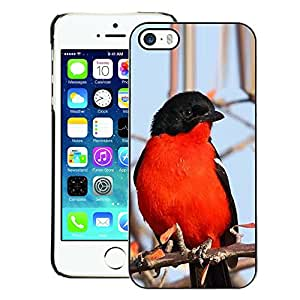 A-type Arte & diseño plástico duro Fundas Cover Cubre Hard Case Cover para iPhone 5 / 5S (Red Blue Black Winter Nature Branch Tree)