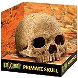Exo Terra Reptile Skull Hide - human