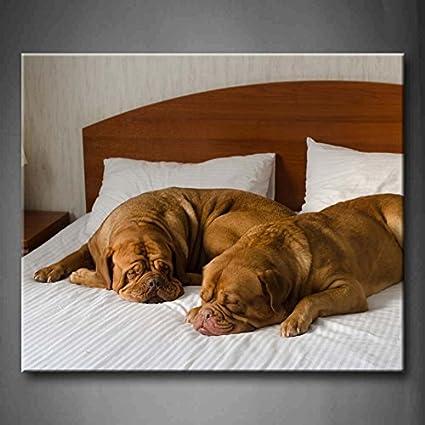 Funny pareja perro en la cama pared arte pintura fotos impresión sobre lienzo Animal la imagen