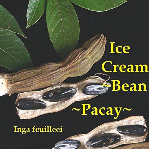 - 1 Pacay ~ Ice Cream Bean Inga Feuilleei Fruit Tree Monkey Tamarind Large Potted Plant WCRF34