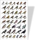 Garden Birds Educational Poster - 48 European Garden Birds