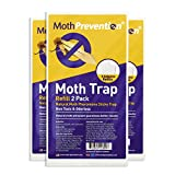 POWERFUL CLOTHES MOTH TRAPS 6-Pack   Odor-Free & Natural from...