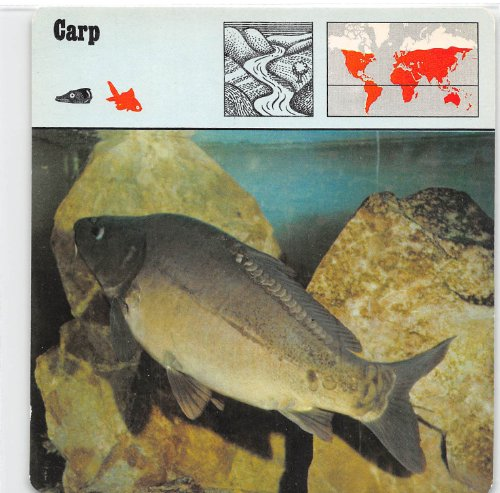 Carp 1975-76 Editions Rencontre Animals Card #336 ()