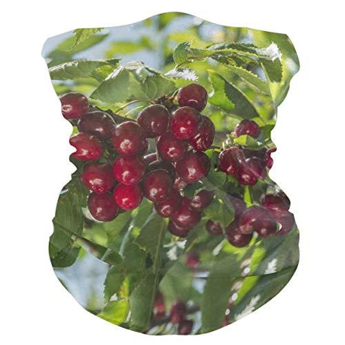 Fertilizing Cherry Trees Headband Womens Bandana Multifunctional Mens Balaclava, Neck Warmer, Face Mask, Neckerchief Aliceband