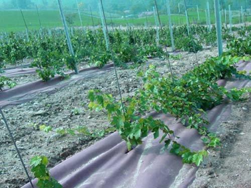 Macoglass Malla geotextil antihierba Plantex Gold. Pieza 2x15m: Amazon.es: Jardín