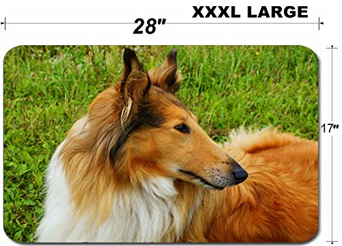 (Liili Large Table Mat Non-Slip Natural Rubber Desk Pads IMAGE ID: 18794069 Portrait of sable and white Long haired Rough Collie dog)