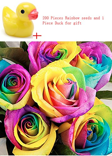 Kofun Colorful Rainbow Rose Flower Seeds Petal Plants Home Garden Yard Decor (1 Bag/200 pieces)