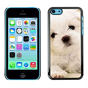 Vortex Accessory Carcasa Protectora Para APPLE iPHONE 5C - Maltese Dog Puppy White Soft -