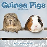 Guinea Pig Calendar - Cute Animal Calendar - Calendars 2017 - 2018 Wall Calendars - Animal Calendar - Guinea Pigs 16 Month Wall Calendar by Avonside