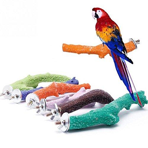 Insight Bird Toy Parrot Mirror - 2