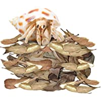 """JOR Mini Catappa for Hermit Crabs, 2"""" High Fiber Indian Almond Leaves for Ideal Environment, Improved Health, Digestion…"""