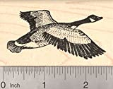 Canadian Goose Rubber Stamp, Canada, North America Bird