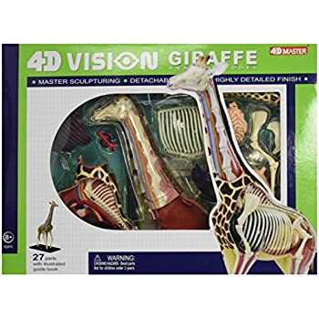 Amazon.com: Famemaster 4D Vision Giraffe Anatomy Model