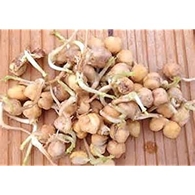 Garbanzo Bean Seed, Microgreen, Sprouting, 5 OZ, Organic Seed, NON GMO - Country Creek LLC Brand - High Sprout Germination- Edible Seeds, Gardening, Hydroponics, Growing Salad Sprouts : Garden & Outdoor