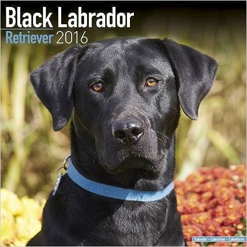 Book BLACK LABRADOR RETRIEVER 2016 Wall Calendar (Square)
