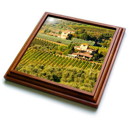 3dRose Danita Delimont - Vineyards - Italy, Tuscany, Chianti, Autumn Vineyard Rows with Bright Color - 8x8 Trivet with 6x6 ceramic tile ()