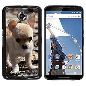 YiPhone /// Prima de resorte delgada de la cubierta del caso de Shell Armor - Chihuahua Puppy Small Baby Pet Dog - Motorola NEXUS 6 / X / Moto X Pro