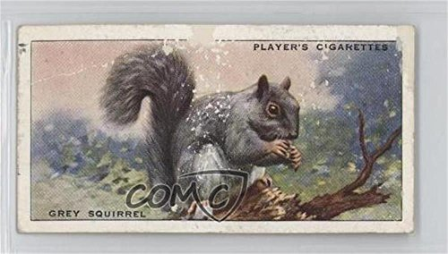 (Grey Squirrel Ungraded COMC Poor (Trading Card) 1939 Player's Animals of the Countryside - Tobacco [Base] #33)