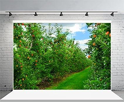 Laeacco Fruit Tree Background 6x4ft Fantastic Apple Orchard Vinyl Photography Backdrop Sunlight Green Meadow Spring Nature Dreamlike Blossom Flowers Garden Tour Girls Woman Portraits Shoot Studio