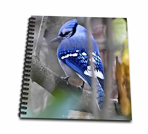 (12x12 memory book) - Lee Hiller Photography Hot Springs National Park Wildlife - Birds Shy Blue jay - Drawing Book