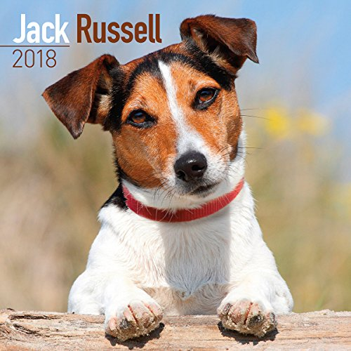 Turner Licensing  PHOTOGRAPHIC Jack Russell 2018 Wall Calendar (18998027337)