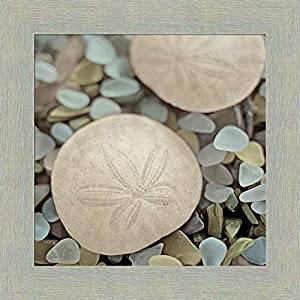 51m66uej85L._SS300_ Best Sand Dollar Wall Art and Sand Dollar Wall Decor For 2020