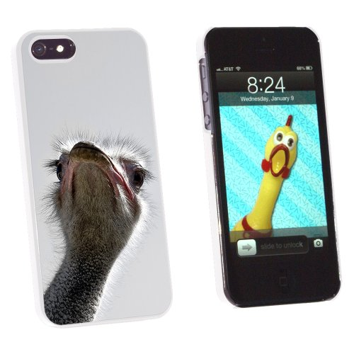 Graphics and More Ostrich Bird - Funny - Snap-On Hard Protective Case for Apple iPhone 5/5s - Non-Retail Packaging - White