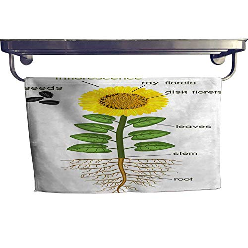 homecoco Pool Gym Towels Parts of Sunflower Plant Morphology of Flowering Plant with Root System Flower Seeds and Titles Towel W 14