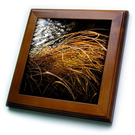 3dRose Alexis Photography - Seasons Autumn - Illuminated dry sedge blades by the dark water - 8x8 Framed Tile (ft_270263_1) -