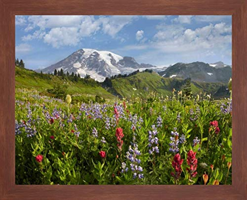 Paradise Meadow and Mount Rainier, Mount Rainier National Park, Washington by Tim Fitzharris - 20