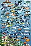 "Baja Pacific Coast & Sea of Cortez Waterproof Fish Identification Card 4"" x 6"""