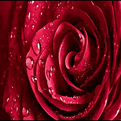 Download Aesthetic Backgrounds Red Roses Pics
