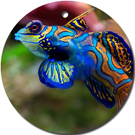 Amazon Com Tropical Fish Aquatic Marine Life Coral Reef Ornament Round Porcelain Christmas Great Gift Idea Home Kitchen