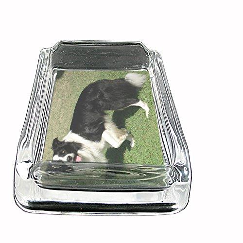 Dog border collie 01 Glass Square Ashtray ()