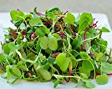 Certified Non-GMO Microgreens Seeds - Spicy Lettuce Mix - For Sprouting (1lb)