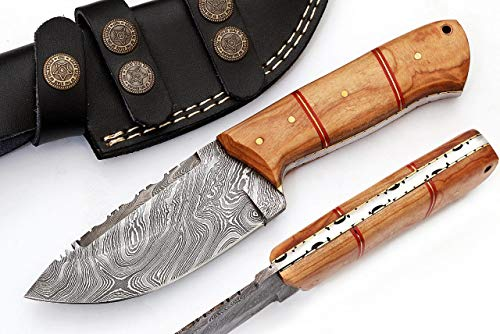 SharpWorld Beautiful Damascus Knife Made Remarkable Damascus Steel Exotic Handle -Best Hunting Knife Sheath TJ102 (Olive Wood)