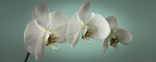 Teal Orchid Canvas Wall Art – 40W x 16H in.