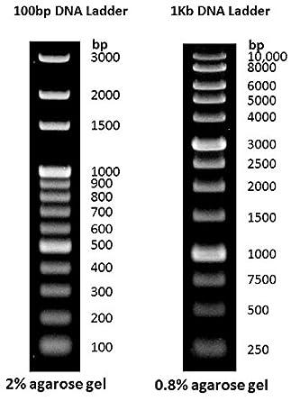 1 KB ADN escalera ADN marcador para ADN ARN agarosa ...
