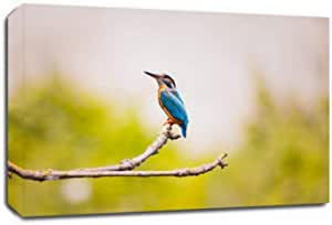 طباعة قماشية لطائر Kingfisher في إطار مقاس 40 × 60 سم