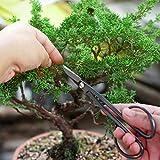 MOSFiATA Bonsai Tools Set 13 Pcs High Carbon