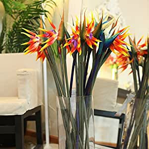 flowers pots planters All sorts of color Strelitzia reginae seeds hybrid bird paradise Bonsai plants Seeds 50pcs
