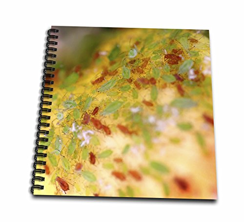 henrik-lehnerer-designs-animal-green-and-brown-aphids-infesting-a-rose-bush-memory-book-12-x-12-inch
