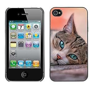 Vortex Accessory Carcasa Protectora Para APPLE iPHONE 4 / 4S - Cat House American Shorthair British -