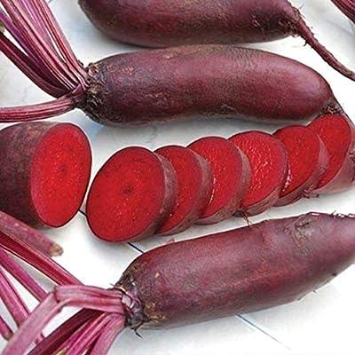 "Cylindra Beet Seeds(Organic) - 6-7"" long, dark red, carrot-shaped beets! Sweet!(50 - Seeds) : Garden & Outdoor"