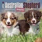 Australian Shepherd Puppies 2016 Mini 7x7