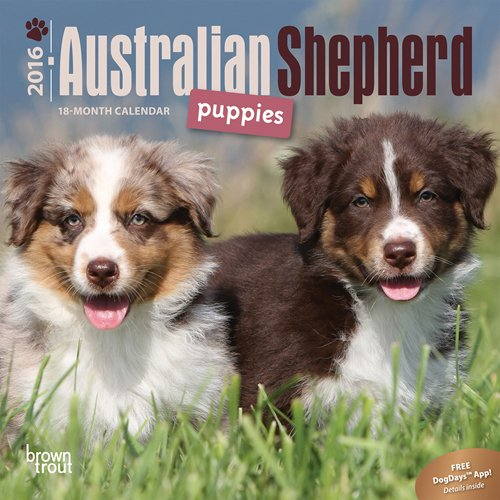 Australian Shepherd Puppies - 2016 Mini Wall Calendar 7 x 7in