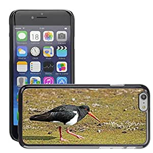 "Super Stella Slim PC Hard Case Cover Skin Armor Shell Protection // M00146189 Oystercatcher Bird Intervention // Apple iPhone 6 4.7"""