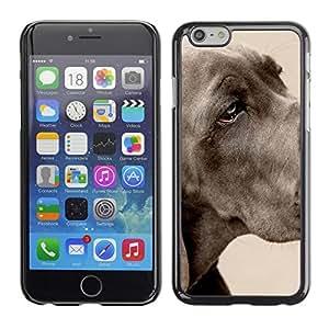 PC/Aluminum Funda Carcasa protectora para Apple Iphone 6 Great Dane Large Dog Grey Pet / JUSTGO PHONE PROTECTOR
