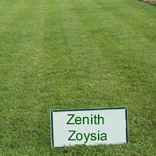 Firm 1 Grassamen Zenith Di Semi zoysia Zoysia Zenith Lb Germinazione Plat 8 gxdzg